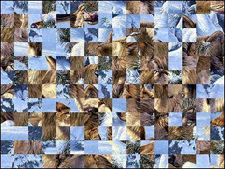 Białoruskie puzzle №119062