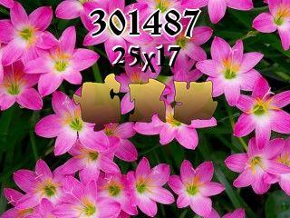 Puzzle №301487