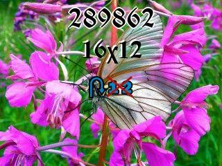 Puzzle zmienny №289862