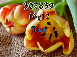 Puzzle zmienny №302839