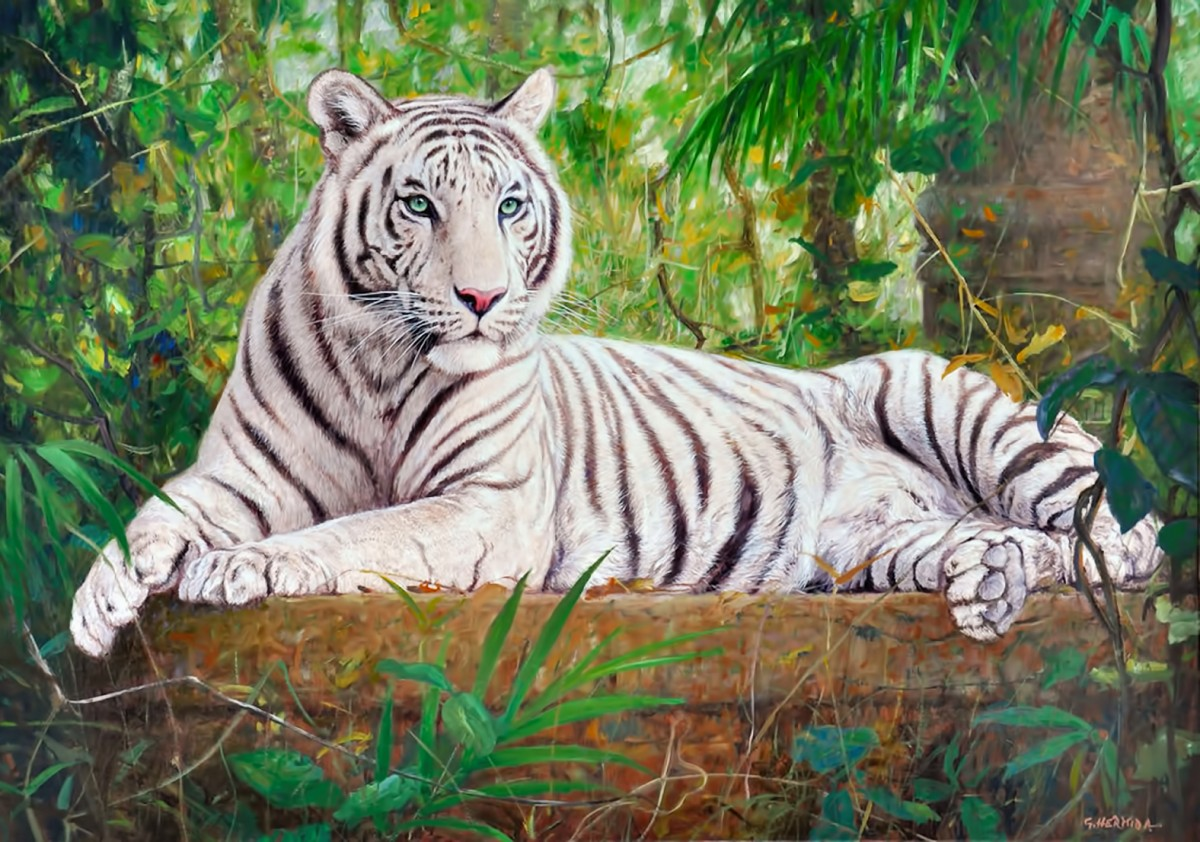 Puzzle Zbierać puzzle online - White tiger