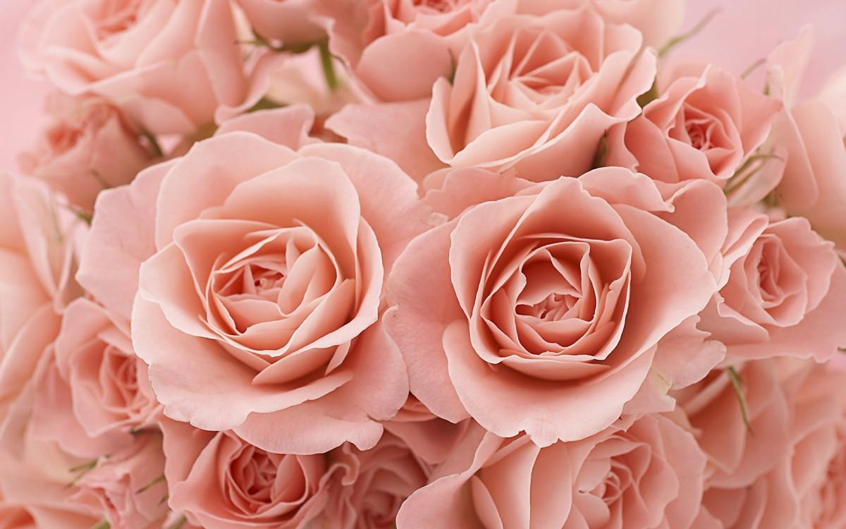 Puzzle Zbierać puzzle online - buket rozovih roz