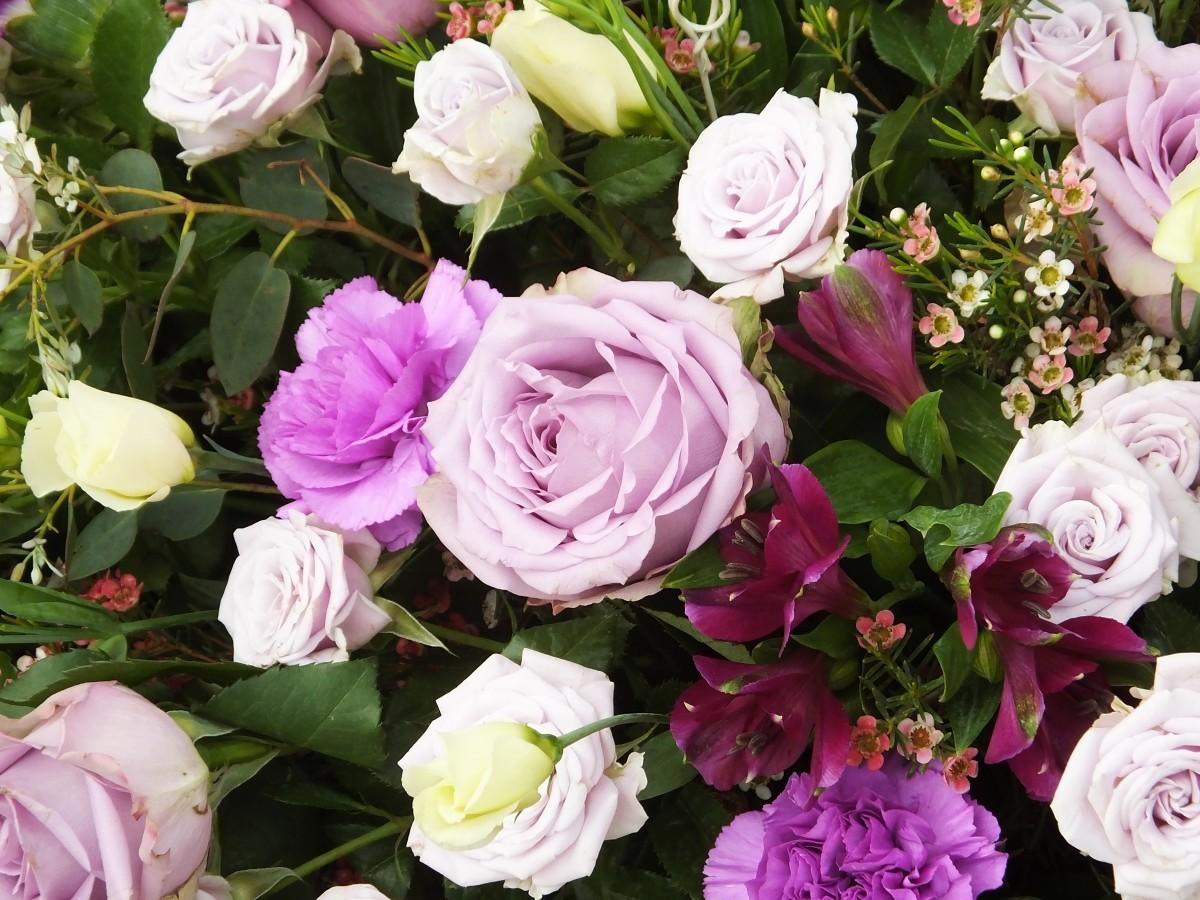 Puzzle Zbierać puzzle online - Bouquet with cloves