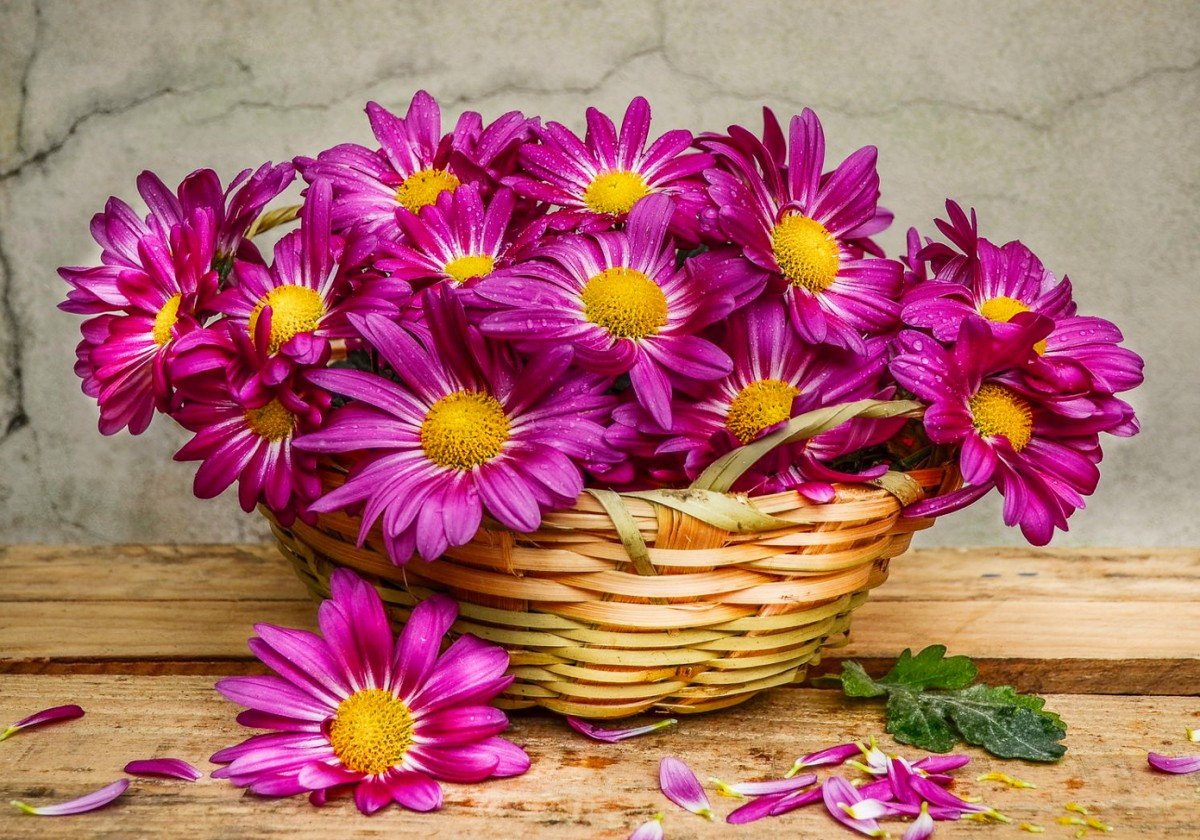 Puzzle Zbierać puzzle online - Chrysanthemums in a basket