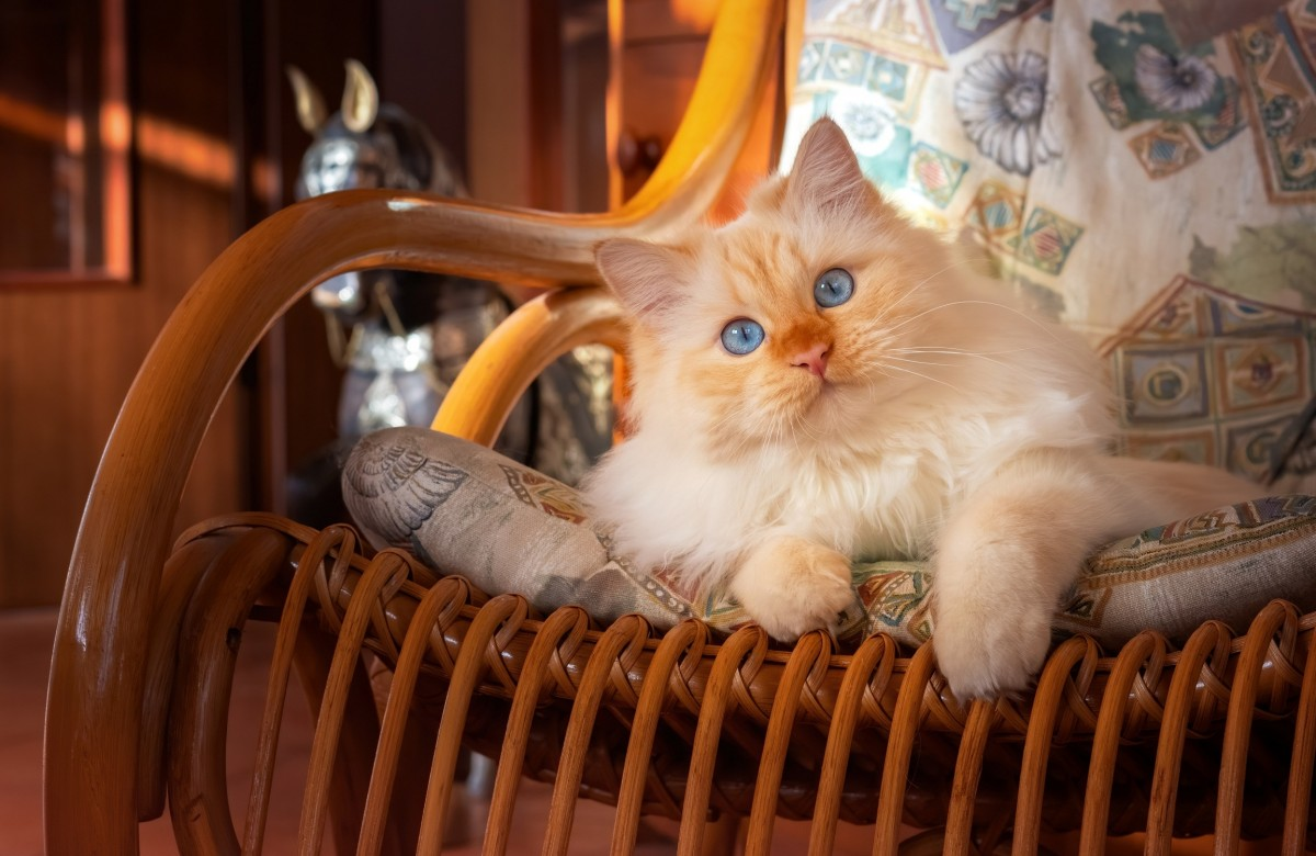 Puzzle Zbierać puzzle online - The cat in the chair