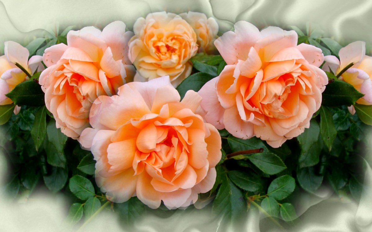 Puzzle Zbierać puzzle online - Delicate roses