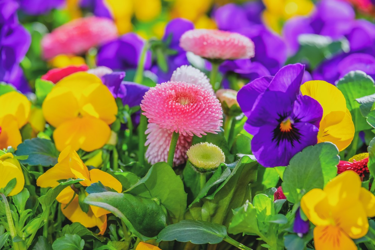 Puzzle Zbierać puzzle online - Colorful flower garden