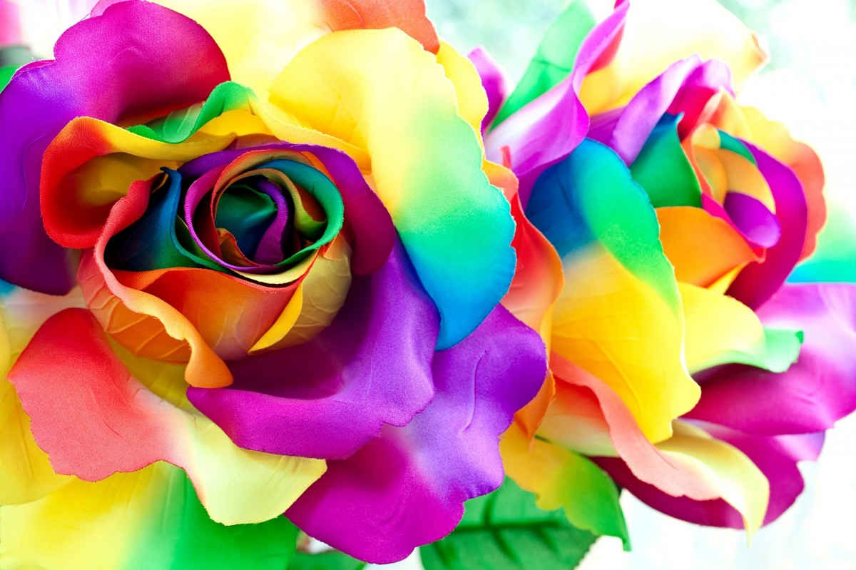 Puzzle Zbierać puzzle online - Rainbow roses