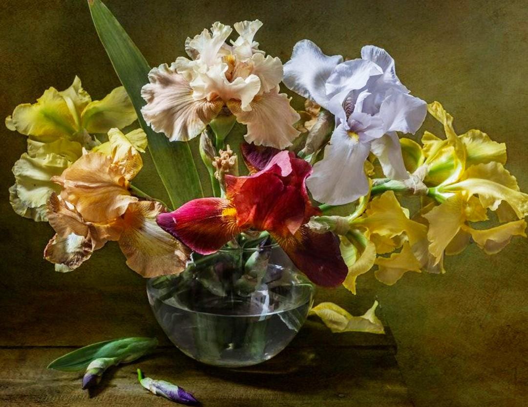 Puzzle Zbierać puzzle online - Colored irises