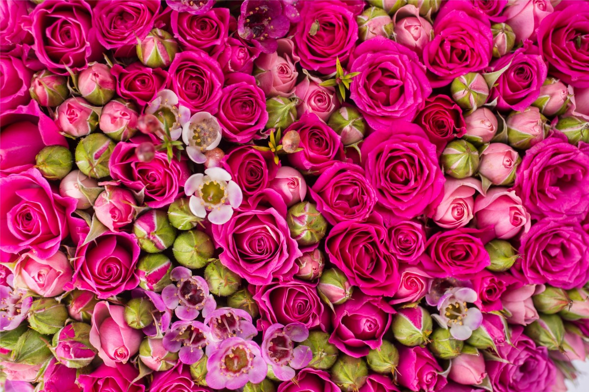Puzzle Zbierać puzzle online - Roses