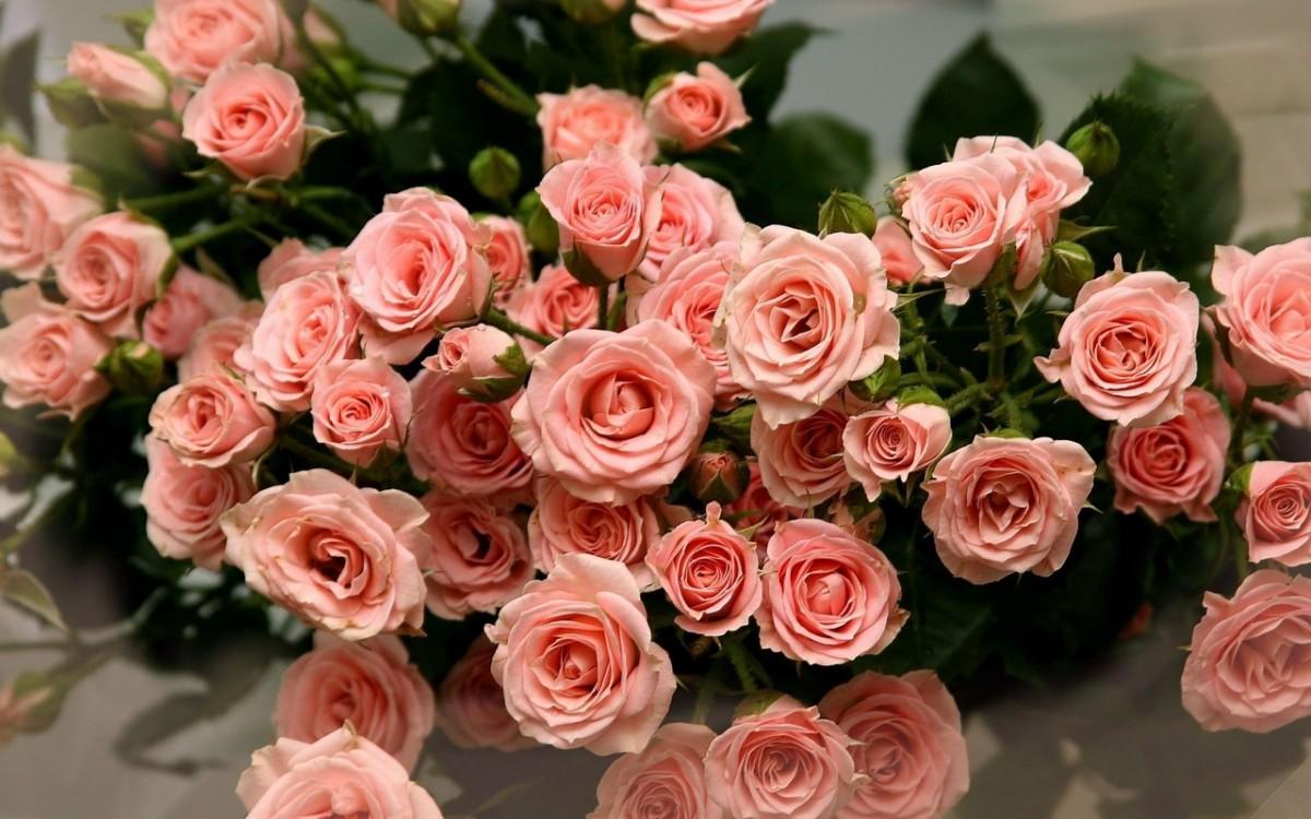 Puzzle Zbierać puzzle online - Rozovie rozi