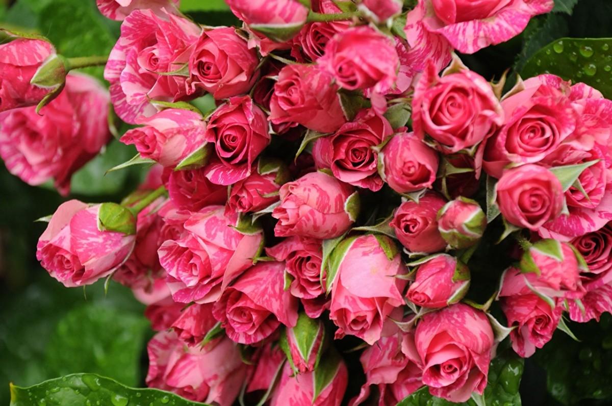 Puzzle Zbierać puzzle online - Pink bouquet