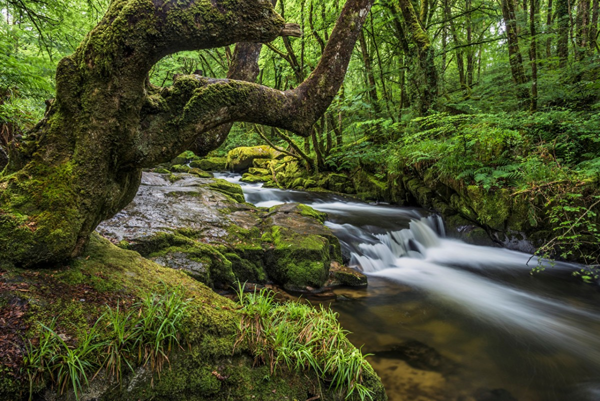 Puzzle Zbierać puzzle online - The Creek in Cornwall
