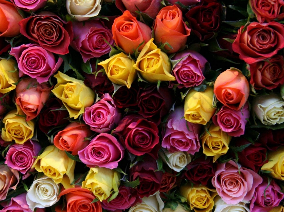 Puzzle Zbierać puzzle online - These different roses