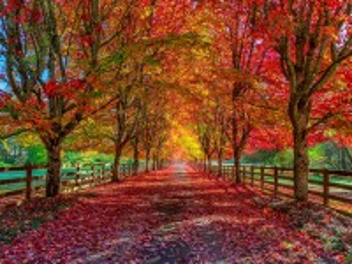 Собирать пазл An Autumn Alley онлайн