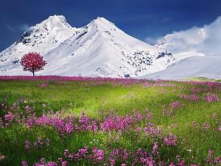 Собирать пазл Alpine meadow онлайн