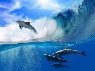 Собирать пазл Dolphins онлайн