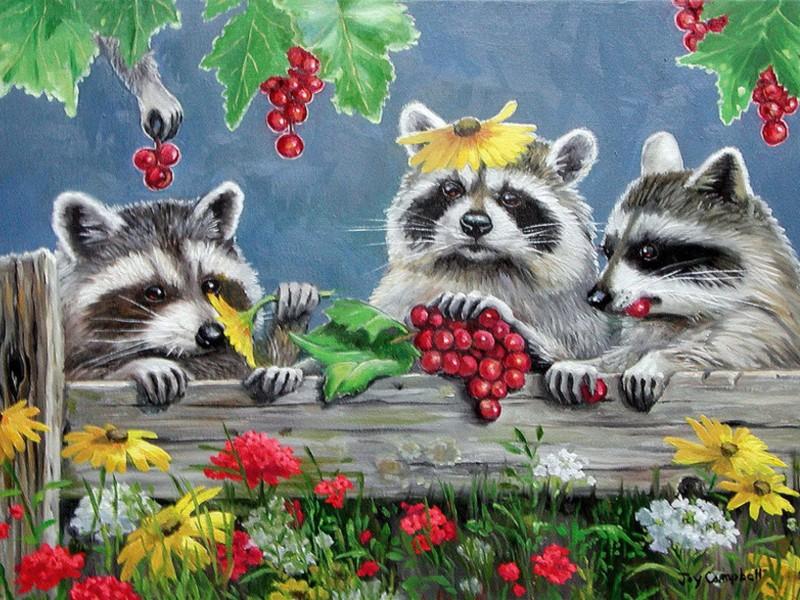 Puzzle Zbierać puzzle online - Raccoons