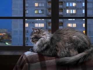 Собирать пазл Urban twilight онлайн