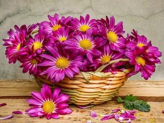 Собирать пазл Chrysanthemums in a basket онлайн