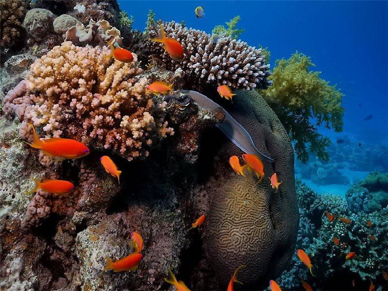 Puzzle Zbierać puzzle online - I snova koralli