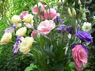 Собирать пазл Irish rose онлайн