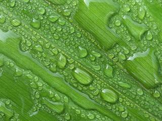 Собирать пазл Drops on the leaf онлайн