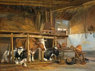 Собирать пазл Cows in the barn онлайн