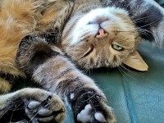 Собирать пазл Catlike онлайн