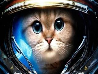 Собирать пазл Gagarin cat онлайн