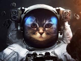 Собирать пазл Cat astronaut онлайн