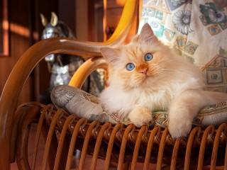 Собирать пазл The cat in the chair онлайн