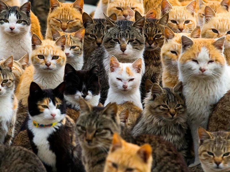 Puzzle Zbierać puzzle online - Cats