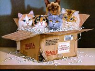 Собирать пазл Cats in box онлайн