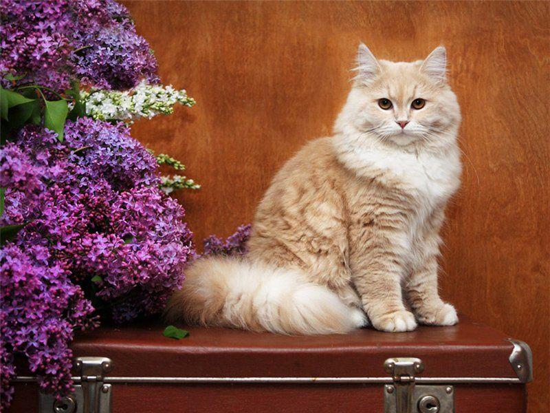 Puzzle Zbierać puzzle online - Cat on a suitcase