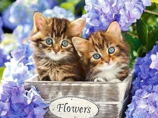 Собирать пазл Kittens and flowers онлайн