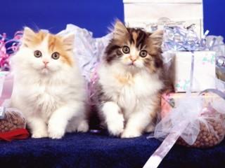 Собирать пазл Kittens with gifts онлайн