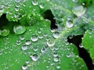 Собирать пазл The leaves in the dew онлайн
