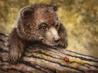 Собирать пазл Bear онлайн