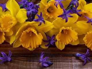 Собирать пазл Daffodils and hyacinth онлайн