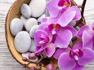 Собирать пазл Orchid on pebbles онлайн