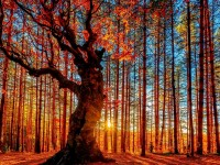 Собирать пазл Autumn and the sun онлайн