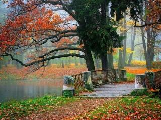 Собирать пазл Autumn in the Park онлайн