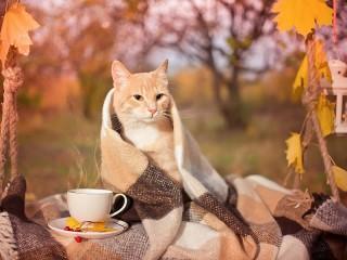 Собирать пазл Autumn cat онлайн