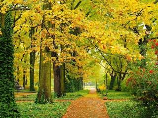 Собирать пазл Autumn Park онлайн