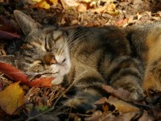 Собирать пазл Autumn dream онлайн