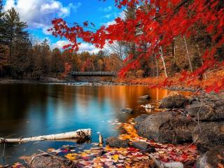 Собирать пазл Autumn scene онлайн