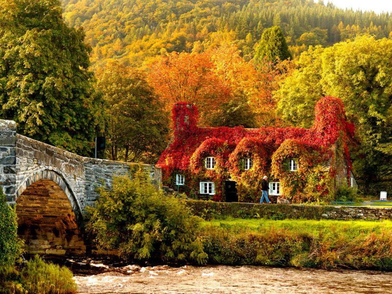 Puzzle Zbierać puzzle online - Autumn ivy