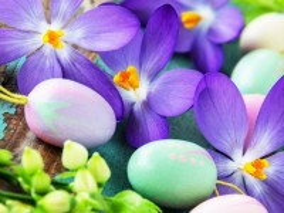 Собирать пазл Easter crocuses онлайн