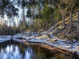 Собирать пазл First snow in the woods онлайн